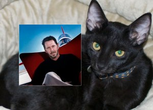 My new kitten, Java, and Oracle's Larry Ellison.  Separated at birth?